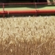 Combine Harvester Cuts Ripe Wheat in Field