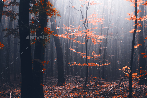 Red tree in mysterious autumn forest - Stock Photo - Images