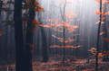 Red tree in mysterious autumn forest - PhotoDune Item for Sale