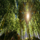 Sun And Forest - VideoHive Item for Sale