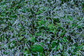 Many silkworms eating  mulberry leaves - PhotoDune Item for Sale