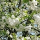 The First Spring White Flowers on a Branch - VideoHive Item for Sale