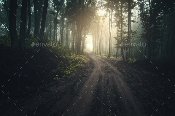 Road through dark mysterious forest with fog - Stock Photo - Images