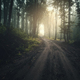Road through dark mysterious forest with fog - PhotoDune Item for Sale