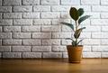 Ficus - PhotoDune Item for Sale