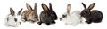 Rabbits - PhotoDune Item for Sale