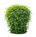 Green lush - PhotoDune Item for Sale
