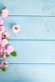Cherry blossom - PhotoDune Item for Sale