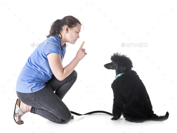 dog, owner and obedience - Stock Photo - Images