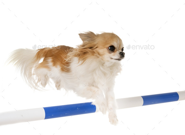 training of agility - Stock Photo - Images