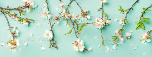 Spring floral background and texture with white almond flowers - Stock Photo - Images