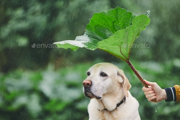 Rainy day with dog in nature - Stock Photo - Images
