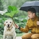 Rainy day with dog in nature - PhotoDune Item for Sale