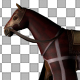 Medieval War Horse Walk - VideoHive Item for Sale
