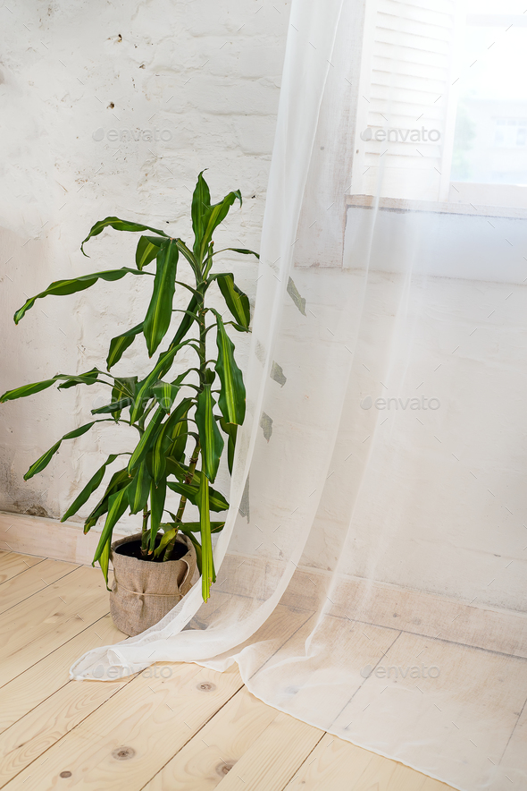 Glass windows with white curtains, flower in a pot on the floor and view over the trees. - Stock Photo - Images