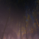 Thickets Of Bamboo - VideoHive Item for Sale
