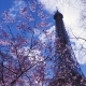 Eiffel Tower with the Sakura Tree Branches - VideoHive Item for Sale