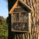 Insect hotel on tree trunk - PhotoDune Item for Sale