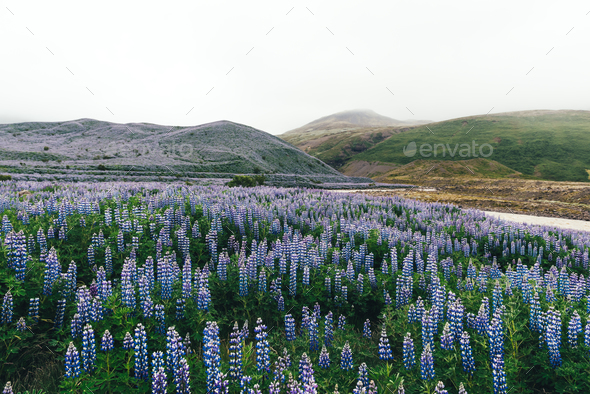 Typical Iceland landscape - Stock Photo - Images