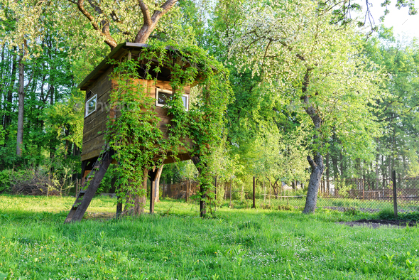 House on tree - Stock Photo - Images