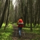 Woman with a Red Backpack Travels around the Forest Road - VideoHive Item for Sale
