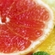 Footage of Orange, Grapefruit and Lemon Slice Lying on Table - VideoHive Item for Sale