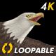 Two Bald Eagles - Flying Around - Transparent Loop - 4K - 22