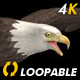 Two Bald Eagles - Flying Around - Transparent Loop - 4K - 23