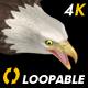 Two Bald Eagles - Flying Around - Transparent Loop - 4K - 28