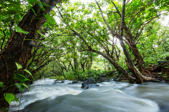 Creek in jungle - Stock Photo - Images