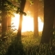 Beautiful Misty Sunrise in the Summer Forest - VideoHive Item for Sale