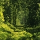 Beautiful Tunnel of Green Trees. Old Abandoned Railway Line, in the Alley of Green - VideoHive Item for Sale