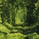 Beautiful Tunnel of Green Trees - VideoHive Item for Sale
