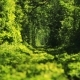 Beautiful Tunnel of Green Trees . Tunnel of Love. Old Abandoned Railway Line, in the Alley of Green - VideoHive Item for Sale