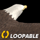 Two Bald Eagles - Flying Around - Transparent Loop - 4K - 17