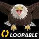 Two Bald Eagles - Flying Around - Transparent Loop - 4K - 19