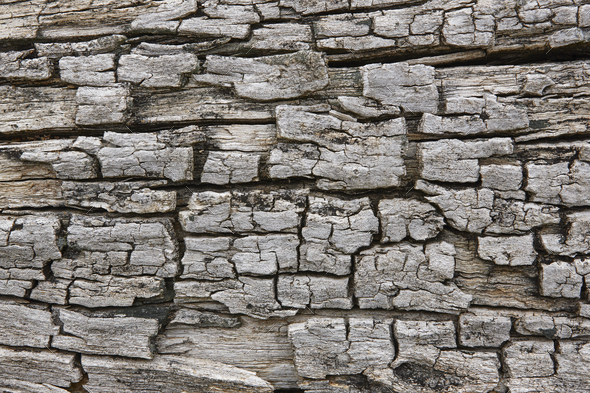 Tree bark surface. Textured wooden background. Horizontal - Stock Photo - Images