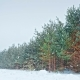 Pine Trees Covered with Snow on Frosty Evening - VideoHive Item for Sale