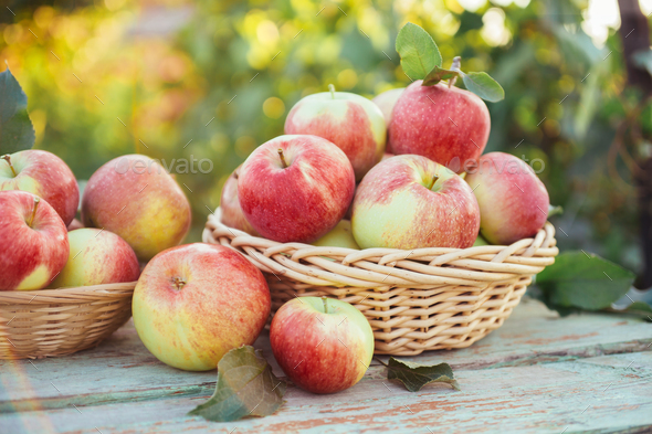 Apples  - Stock Photo - Images