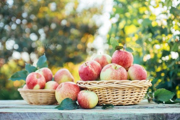 Organic apples  - Stock Photo - Images