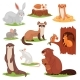 Forest Animals Vector Cartoon Animalistic