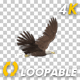 Eagle - Bald - Flying Around - Transparent Loop - 4K - VideoHive Item for Sale