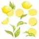 Set of Lemons - GraphicRiver Item for Sale