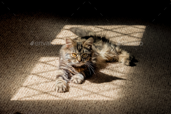 kitten in the shadows - Stock Photo - Images