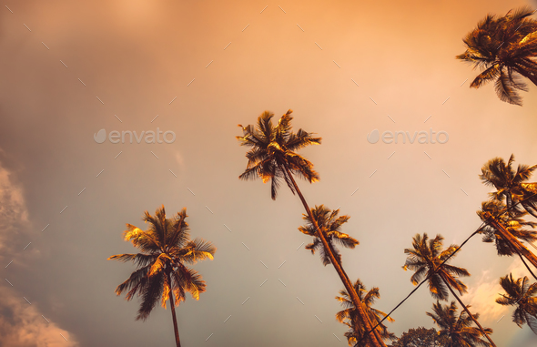 Palm trees on sunset - Stock Photo - Images