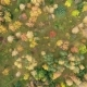 Deciduous Grove Is Painted with Bright Autumn Colors - VideoHive Item for Sale