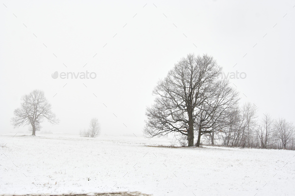 Winter Landscape with Bare Trees - Stock Photo - Images