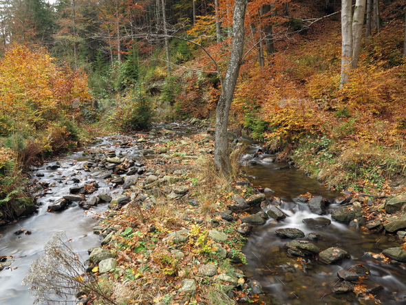 Brook in the autumn forest - Stock Photo - Images