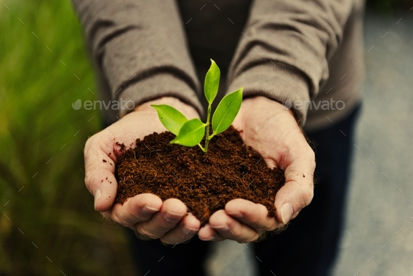 Hands holding a pile of earth soil with a growing plant - Stock Photo - Images