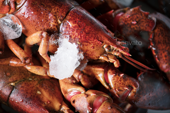 Cooked lobster food photography recipe idea - Stock Photo - Images
